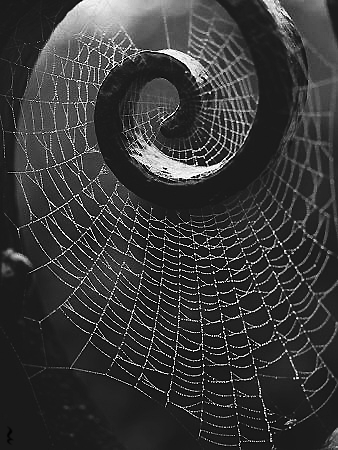 darkestdee:</p> <p>LIFE IS ONE BIG SPIDER'S WEB</p> <p>WE ARE CAUGHT IN THE WEB.<br /> WE MUST FREE OURSELVES.<br /> THE PEOPLE OF OASIS CALL OUT TO US<br /> TO SAVE THEM AND THEIR TOWN.<br /> THE DEAD GAME HAS BEGUN.