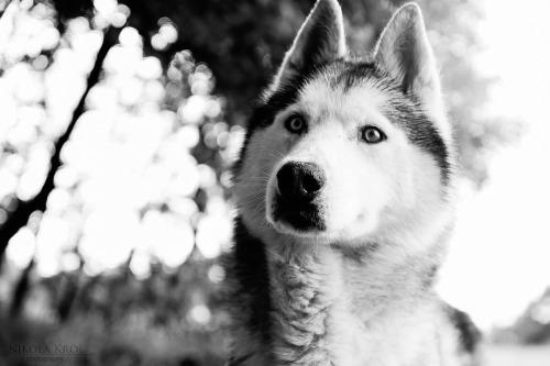 threedogsnight:</p> <p>Yeti 2 by ~Neferetre