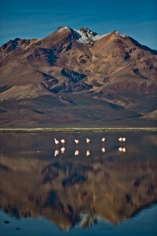 theoceanrolls:Salar de Surire - Chile (by lostin4tune)