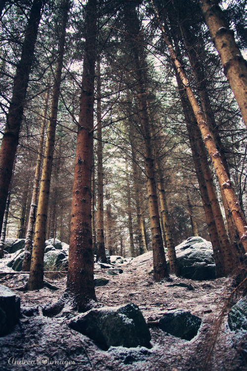 brutalgeneration:</p> <p>Deep forest (by andrea.k.e)</p> <p>The power of nature is awe-inspiring.<br /> The way the trees soar up to the sky.<br /> The sky that holds the shining sun,<br /> casting its bright glow on everyone.<br /> It is unique and divine in its own way.