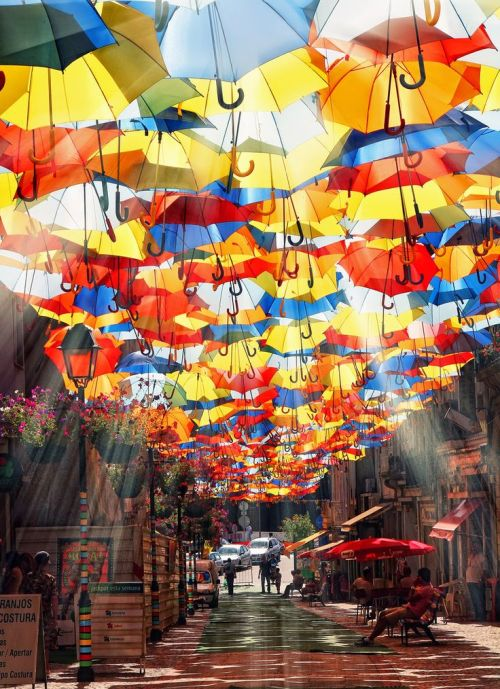 Umbrellas canopy over a small street.