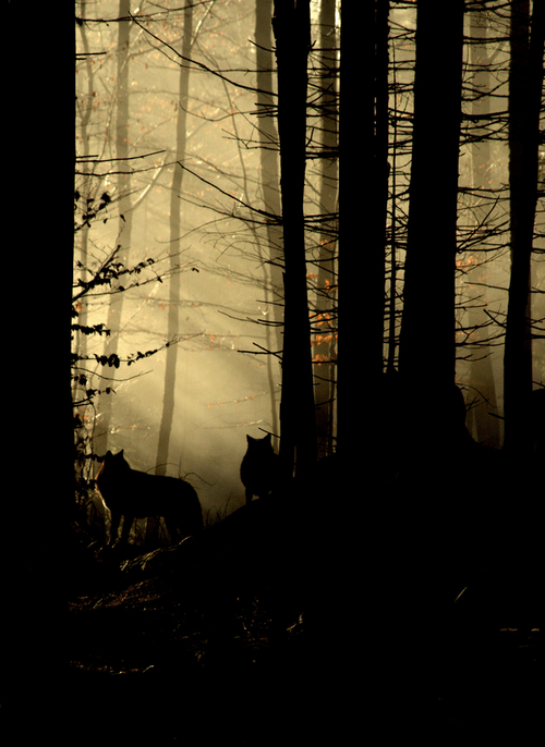 quiet-hippie:<br /> THE WOLVES ARE GATHERING.<br /> THEY KNOW SOMETHING BAD<br /> IS ABOUT TO HAPPEN.<br /> THE DEAD ARE COMING.<br /> THEY ARE COMING FOR YOU.