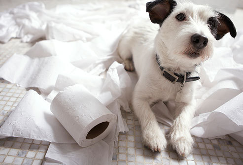 dog with toilet paper Posted by Puppy Escapes on Tumblr