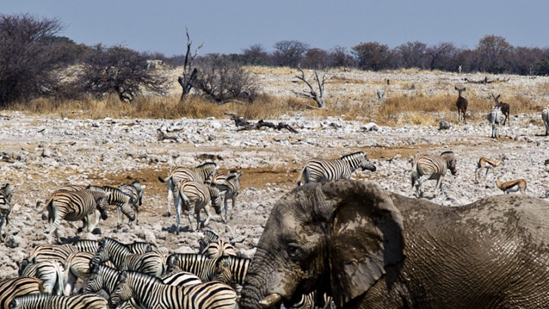 Ultimate Namibia – Small group safari tours