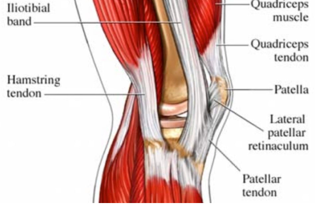 all about patellar quadriceps tendon tears 321gomd
