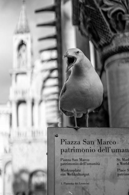 Venedig-16