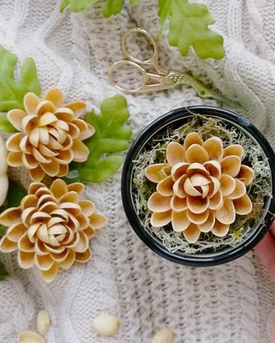 kwiaty z pistacji
