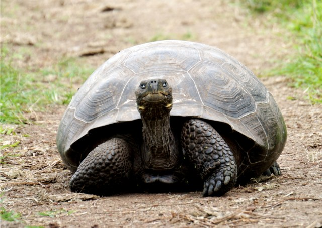 Pregnant and feeling like a tortoise