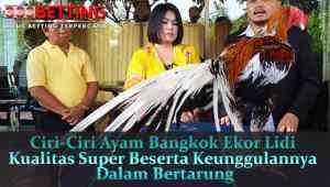 Ciri-Ciri-Ayam-Bangkok-Ekor-Lidi-Kualitas-Super-Beserta-Keunggulannya-Dalam-Bertarung