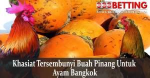 khasiat-Tersembunyi-Buah-Pinang-Untuk-Ayam-Bangkok