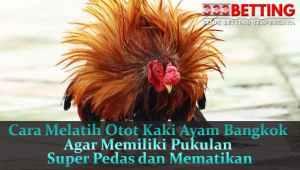 Cara-Melatih-Otot-Kaki-Ayam-Bangkok-Agar-Memiliki-Pukulan-Super-Pedas-dan-Mematikan