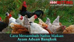 Cara-Menambah-Nafsu-Makan-Ayam-Aduan-Bangkok