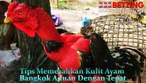 Tips-Memerahkan-Kulit-Ayam-Bangkok-Aduan-Dengan-Tepat