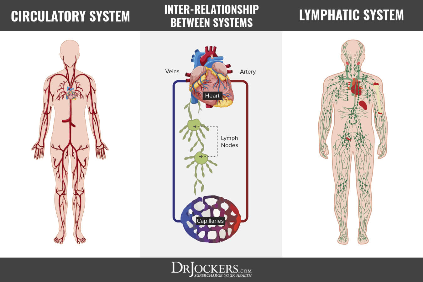 10 Ways To Improve Your Lymphatic System