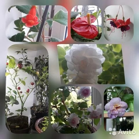 Комнатные цветы цветущие и декоративно лиственные купить в ...