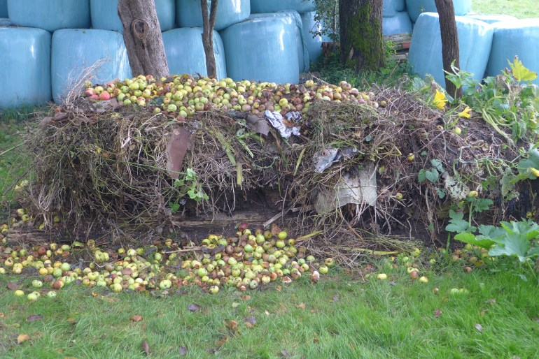 Our thriving compost