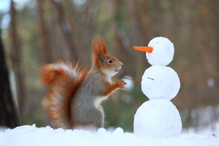 Фотосказ о том, как белка снеговика лепила