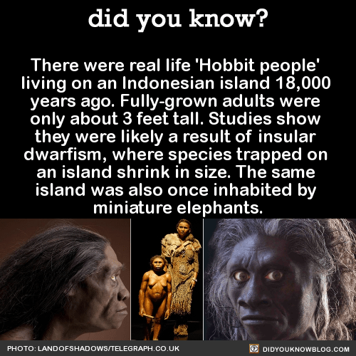 There were real life 'Hobbit people' living on an Indonesian island 18,000 years ago. Fully-grown adults were only about 3 feet tall. Studies show they were likely a result of insular dwarfism, where species trapped on an island shrink in size. The same island was also once inhabited by miniature elephants. Source
