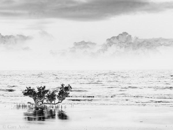surreal mangrove beach