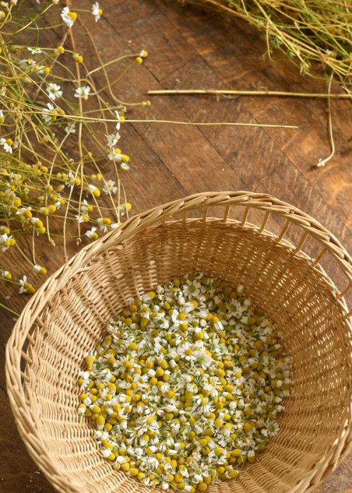 HERBS herbalism Herbal Medicine chamomile lunastarwildcrafts •