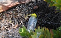 Bottles of energy drink and dishwashing solution.