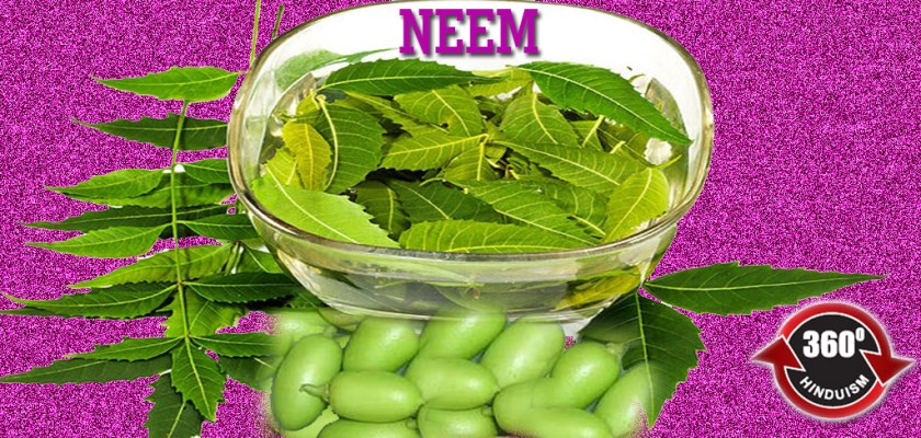 Ayur Plant-NEEM