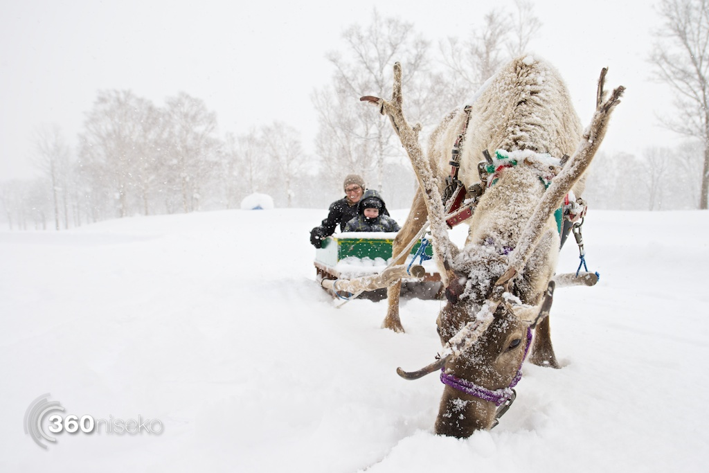 Niseko-village-reindeer-sledding-2