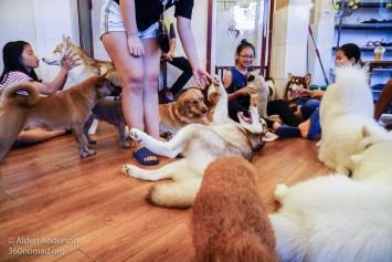Hachiko Dog Cafe Ho Chi Minh City