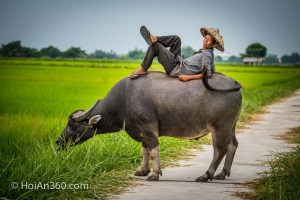 Hung Van and his Buffalo