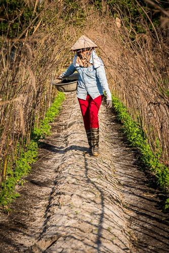 Minh, Farmer, Hoi An, Vietnam