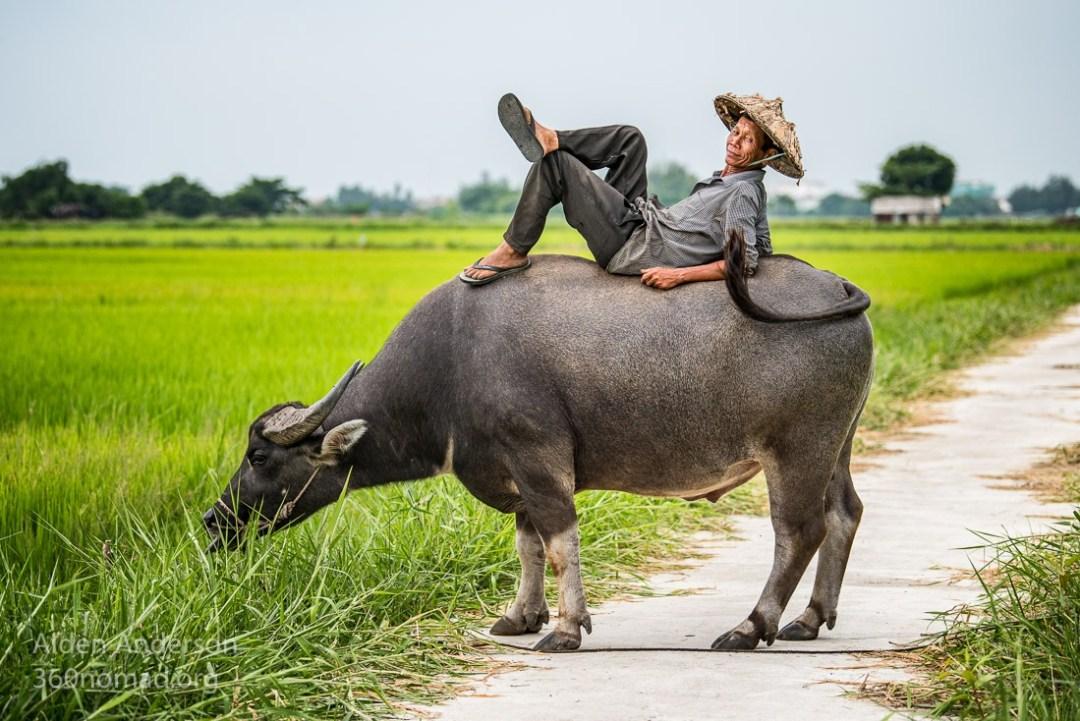 Nam, Man with Buffalo, Hoi An