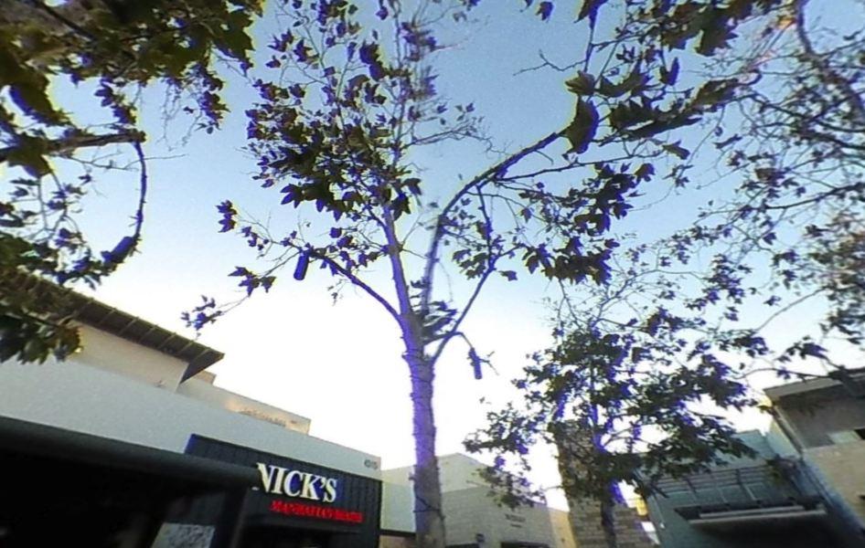 Fringe up/down the whole tree