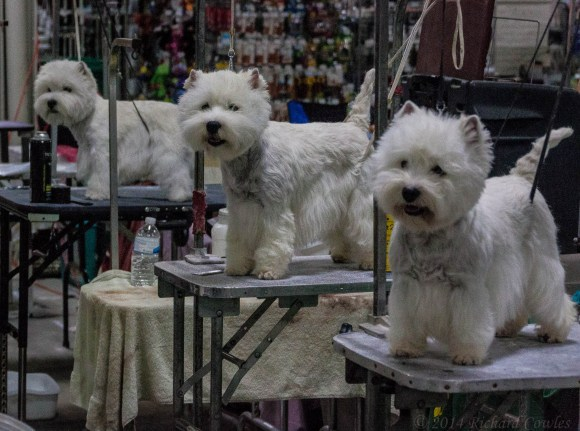 At the Dog Show