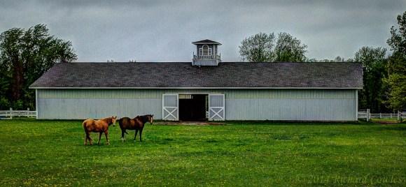 horses2.2