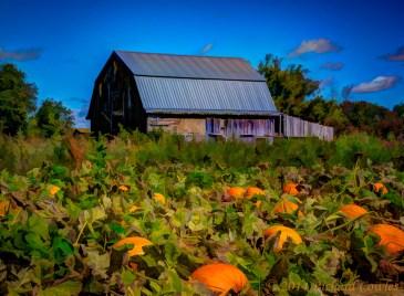 pumpkinpatch1.5