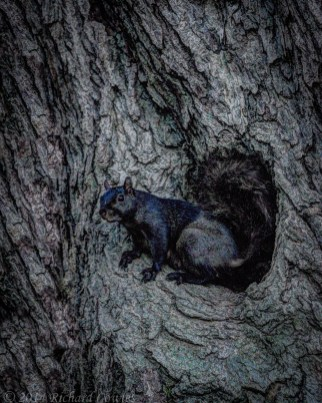 squirrel1.3
