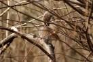 24_squirrel