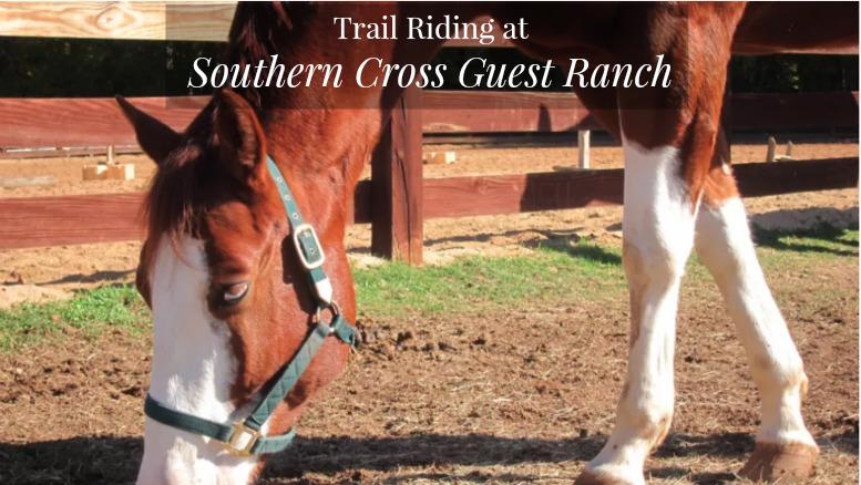 Southern Cross Ranch, Madison, Ga.