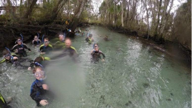Swim with manatees Three Sisters Springs Florida