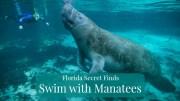 swimwithmanateesfl-secrets777