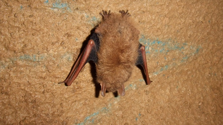 You'll see bats when you go caving in Georgia