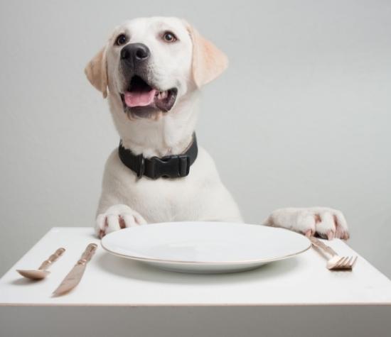 Doggie Dining at Egg Harbor Cafe
