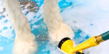 The Dog House of Barrington Charity Dog Wash