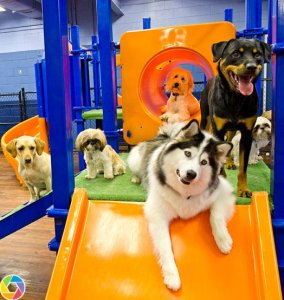 Playtime at The Dog House
