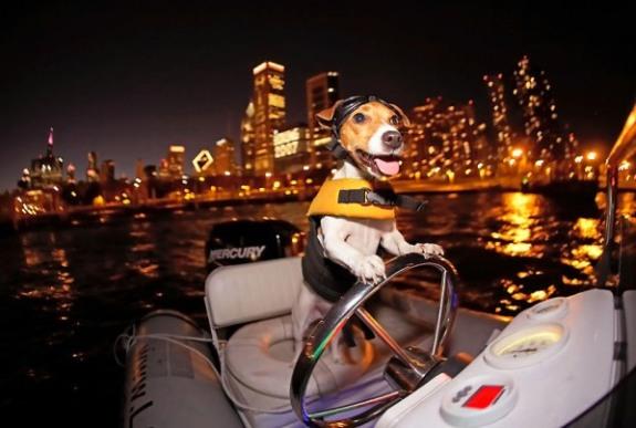 Boat Dog by Anthony Tortoriello