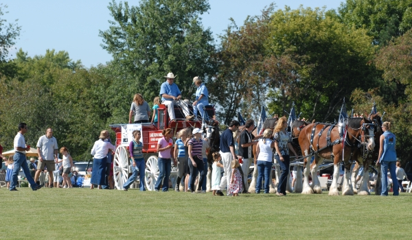 Clydesdales, Beer and Barrington Polo