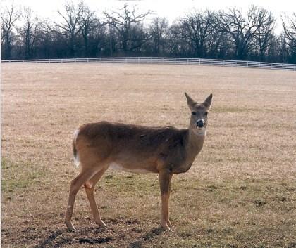 Post - 8 Moate - Deer Spotting