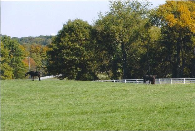 Post - 8 Moate - Horsescape