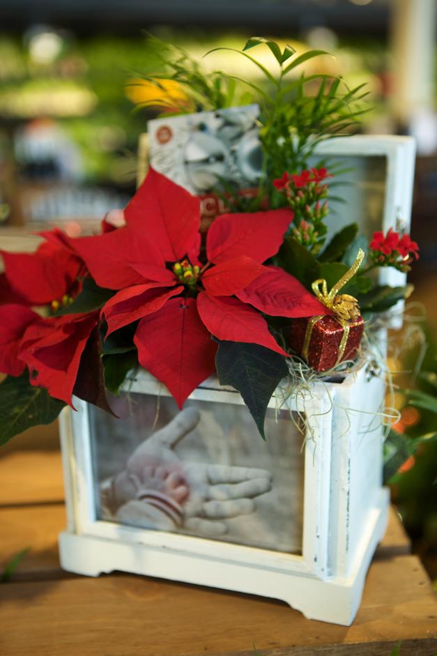 Post - Heinens Poinsettias in a Photo Frame Box