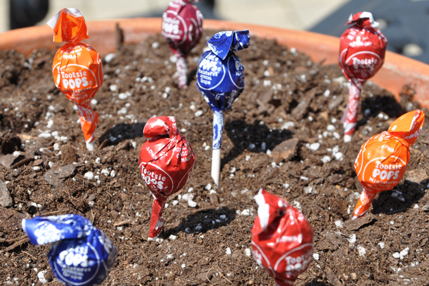 Voila!  Harvest Your Magic Jelly Bean Easter Garden Crop While Hunting for Easter Eggs